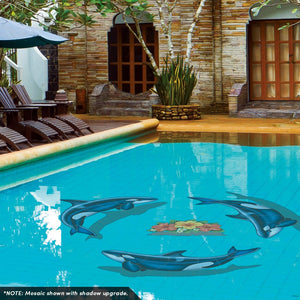Orca - B, Porc | PORC-OR53-36 | Pool Mosaic by AquaBlu Mosaics