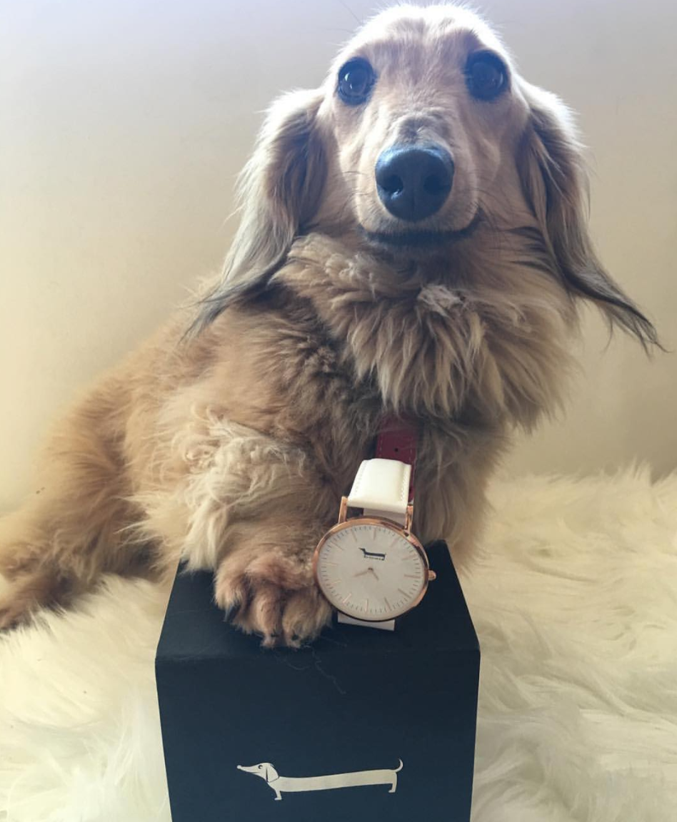 Gemimah by Doxie Watches | 101.Watch USA Dachshund Gifts