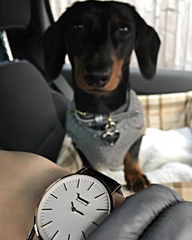 George by Doxie Watches | 101.Watch USA Dachshund Gifts
