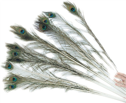 Peacock Feathers Natural Cat Wand