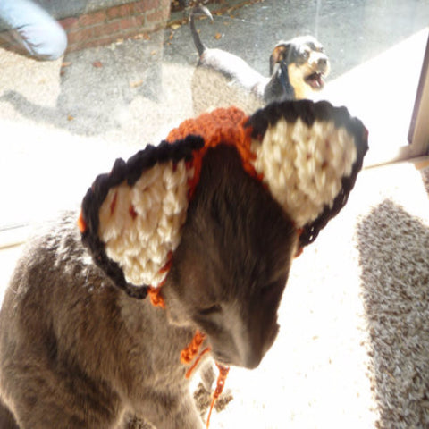 Dog Costume CROCHET PATTERN - BD Luxe Dogs & Supplies - 1