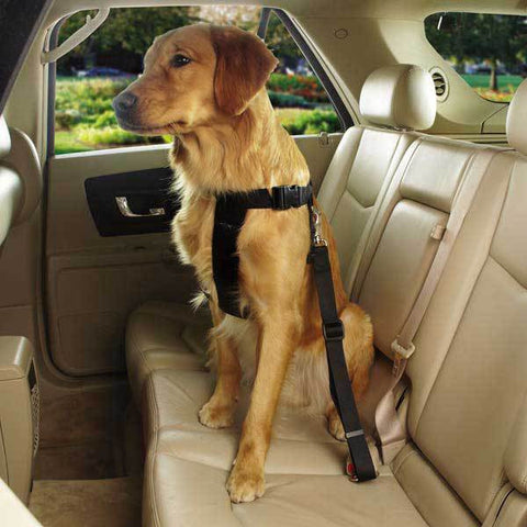 BLACK RIDE RIGHT COMFORT CAR HARNESS FOR DOGS - BD Luxe Dogs & Supplies