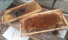 Used bee boxes and frames