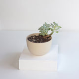 Small Jupiter Pots/Planters - Natural