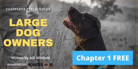Complete Guide for Large Dog Owners