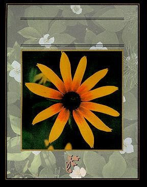 Classic Studios - Black Eyed Susan Wine Bottle Labels - Barley & Vine