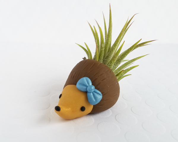 Hedgehog (blue bow) Airplant Holder
