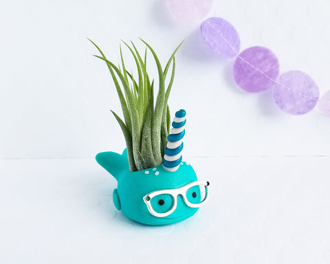 Nerdy Narwhal (teal) Airplant Holder Limited Edition