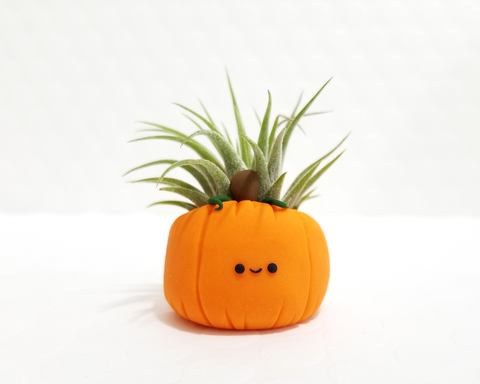 Pumpkin Airplant Holder LIMITED EDITION