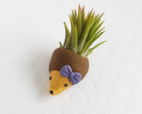 Hedgehog (purple bow) Airplant Holder