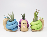 Snail Airplant Holder