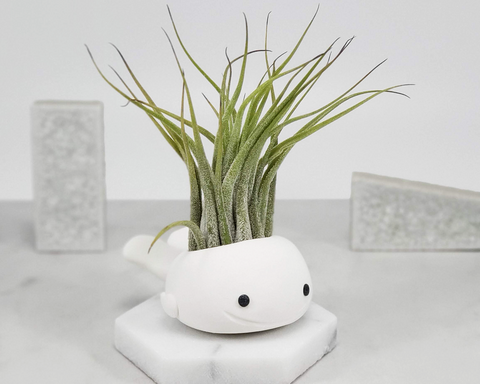 Whale (white) Airplant Holder