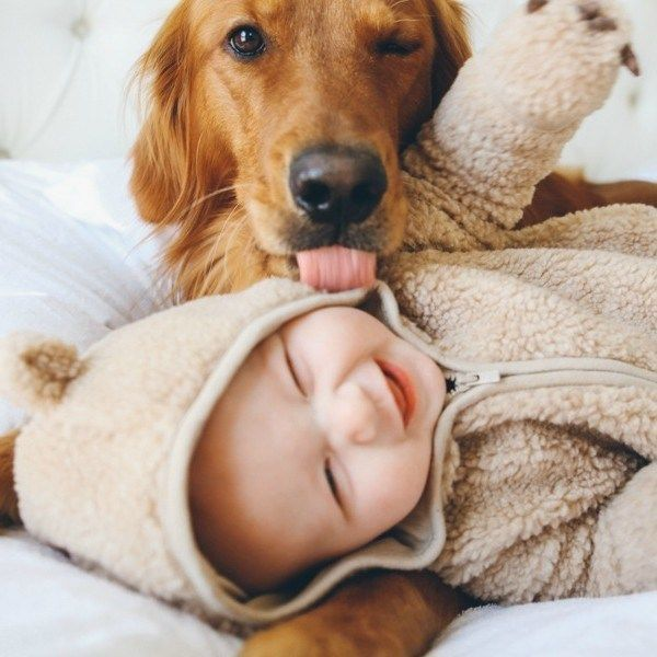 Preparing Your Dog for New Born Baby