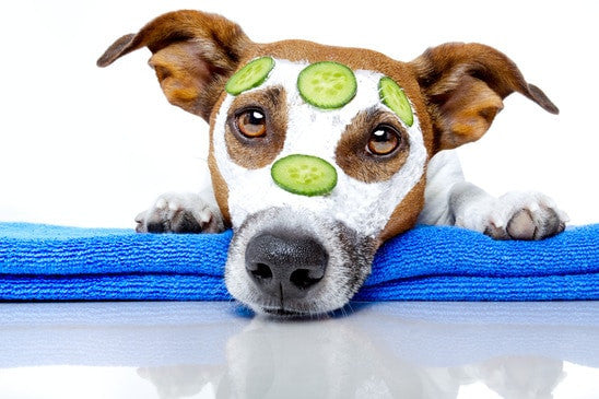 Pet Wellness Every Owner Should Know