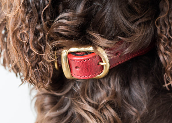 The Vintage Collection Collar (Claret Red) - DoggyHQ