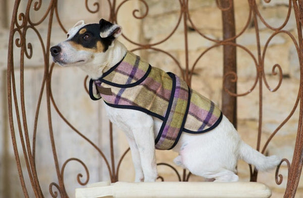 Jasper Dog Coat - DoggyHQ