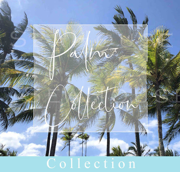 Palm Collection Image