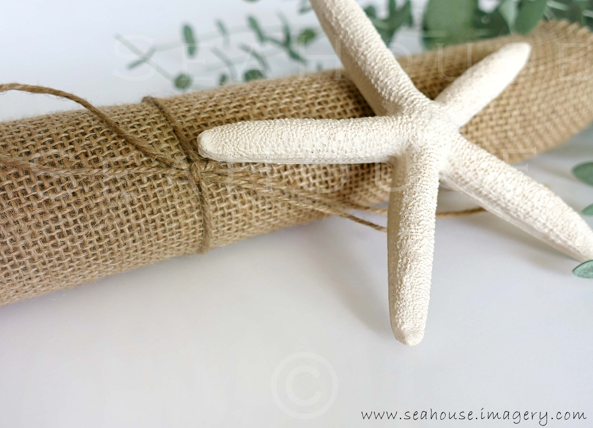 WM Hessian White Starfish for About Us Page SeaHouse Imagery