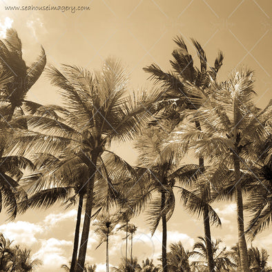 WM Background Antique Gold Palms Swaying 7645 Square Size