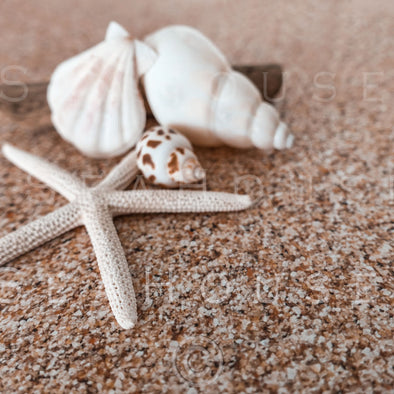 WM On Sand Starfish Shells Driftwood 2575 Square Size