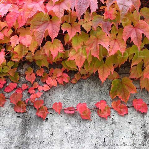 WM Autumn Leaves Cement Wall Background 3342 Square Size