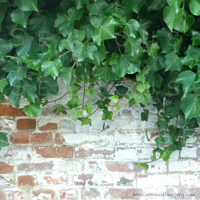 WM Brick and Ivy Background 1256 Square Size
