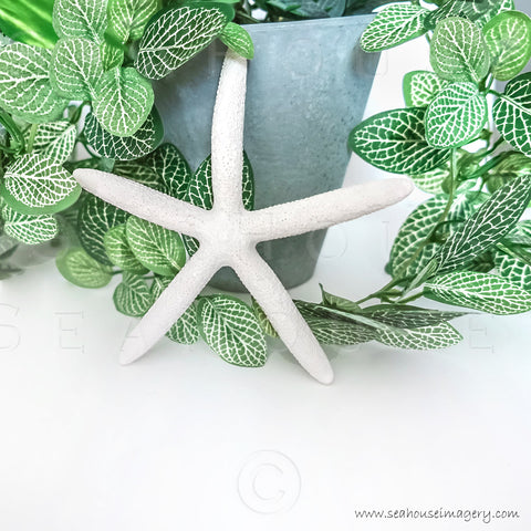 WM Ivy Starfish Pot Plant 969 Square Size