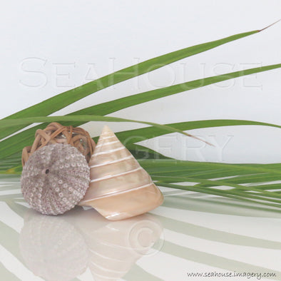 WM Palm Shells 6827 1080x1080px