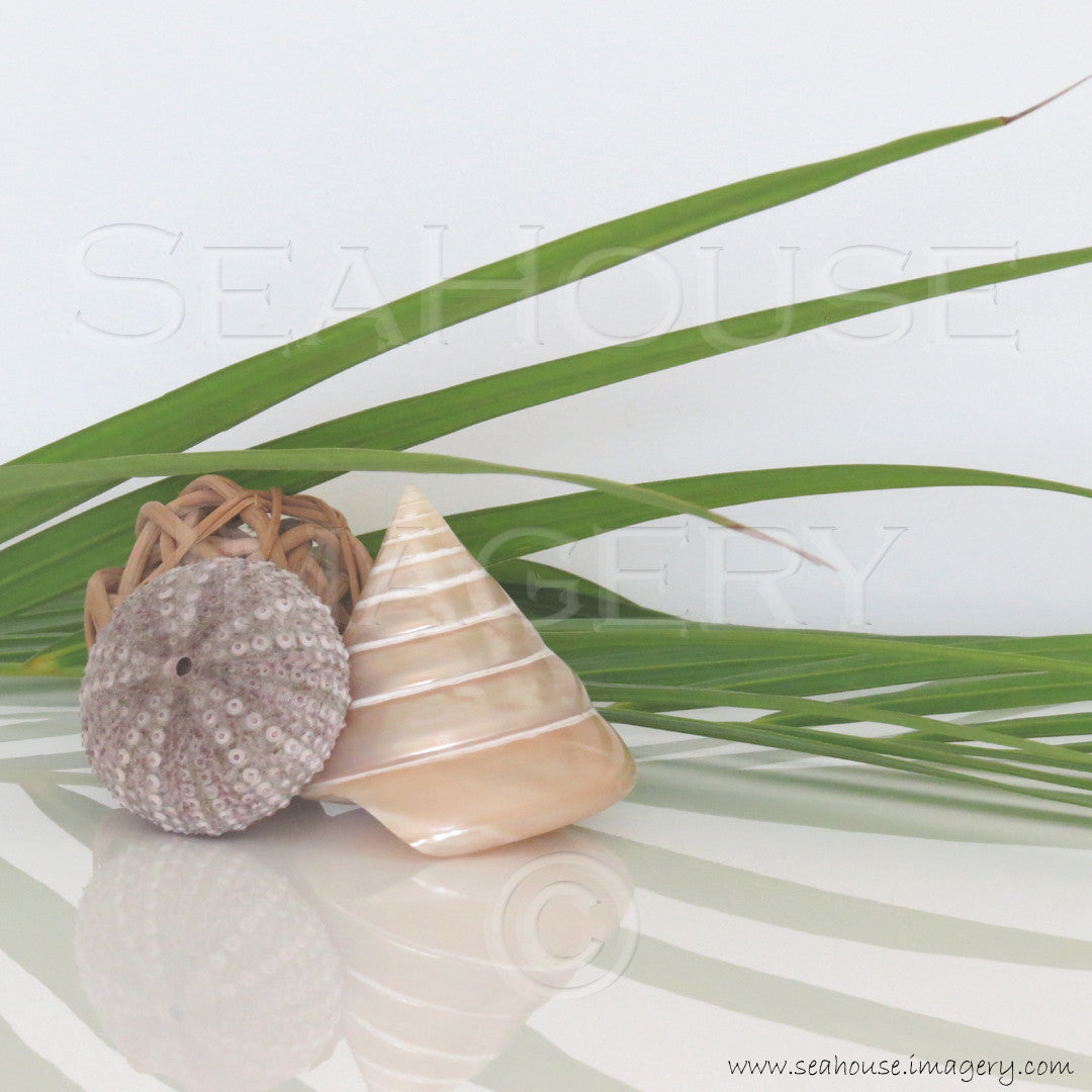 EXCLUSIVE USE WM Palm Shells 6827 1080x1080px