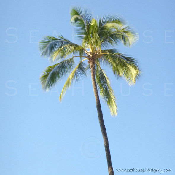 WM EXCLUSIVE USE Palm Tree Tall Square Size