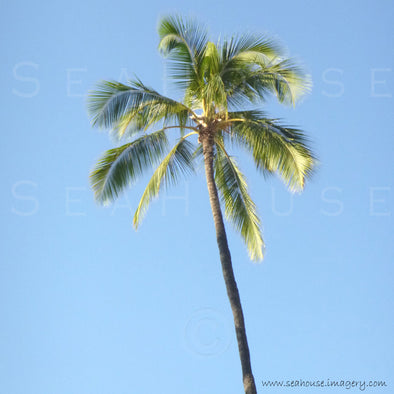 WM Palm Tree Tall Square Size