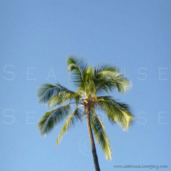 WM EXCLUSIVE USE Palm Tree Top Square Size