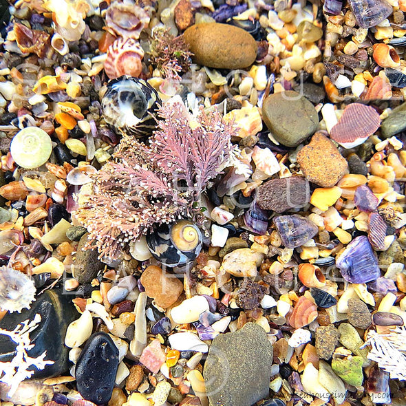 WM Shells & Pebbles Background 7248 Square Size