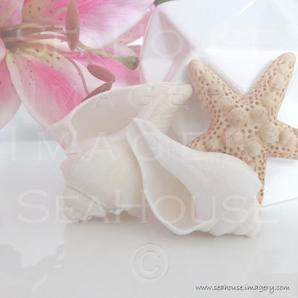 WM EXCLUSIVE USE Shells Lily Starfish 7943 Square Size