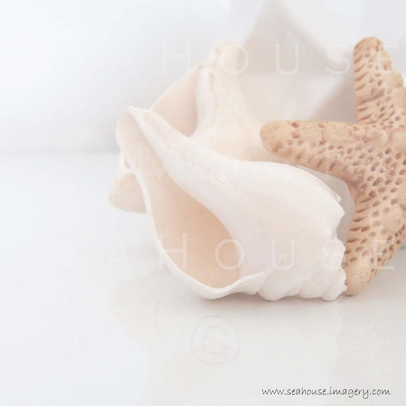 WM EXCLUSIVE USE Shells Starfish 7874 Square Size