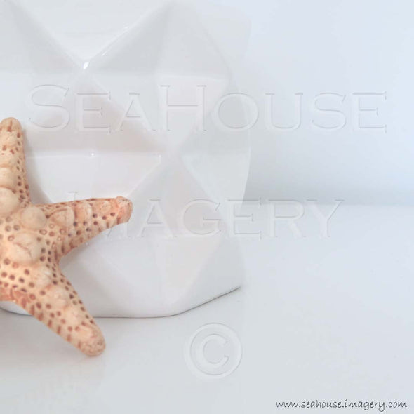 WM Starfish Vase 7876 1080x1080px Instagram Square
