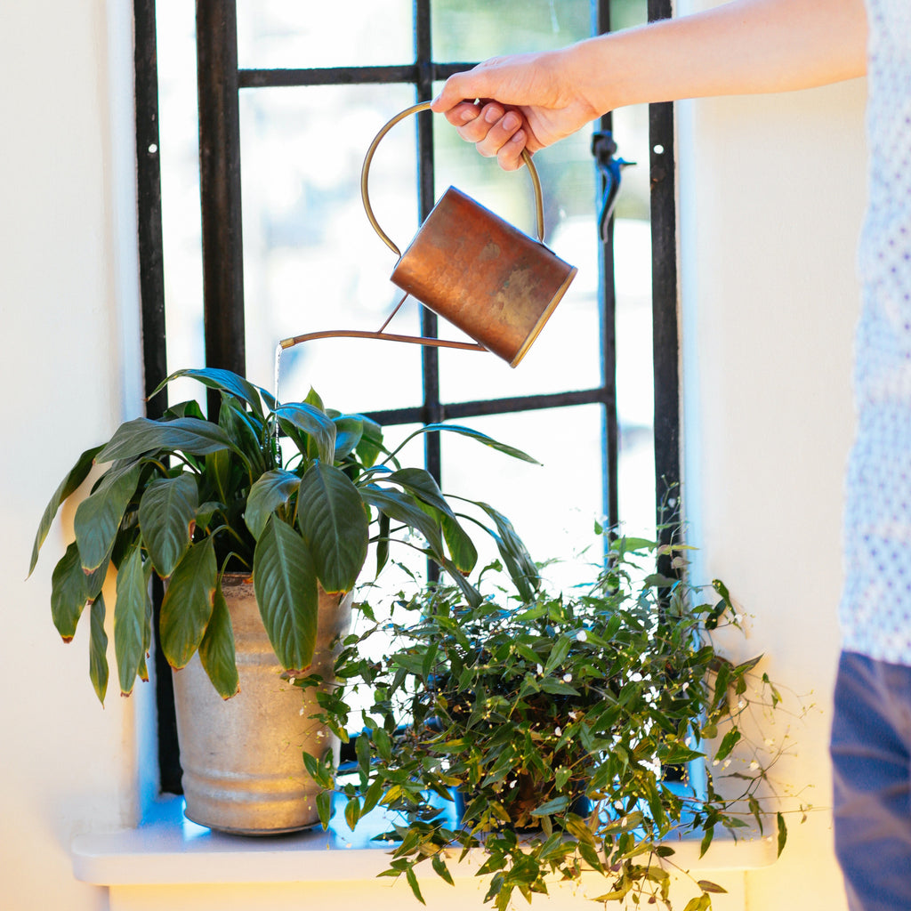 7 Tips for Winter Houseplant Care - Opus Grows House Plant For Dark Room on house plants for stairs, house plants for bathrooms, house plants for hallways, plants for low light rooms, plants that like dark rooms, house plants for offices,