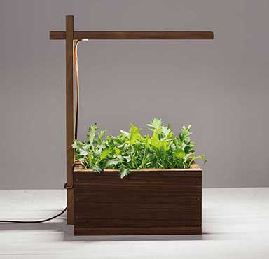 Grow Real: Light Box