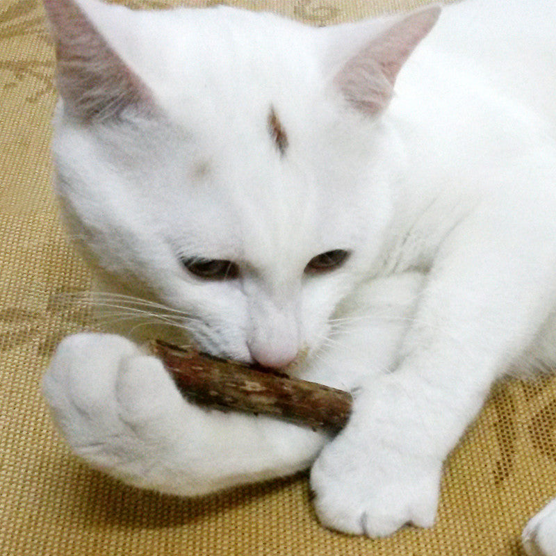 10 PCS Pet Cat Chew Stick Treat Toy