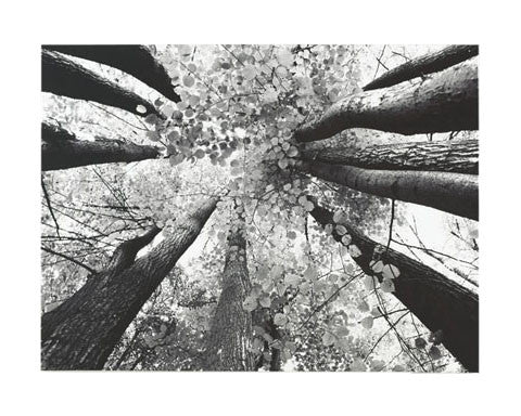 Ananya Black & White Trees Painting