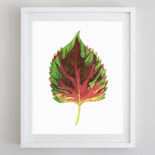 Coleus Watercolor Print by Carly Rae
