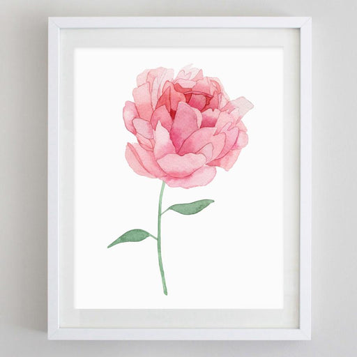 Pink Peony Watercolor Print by Carly Rae
