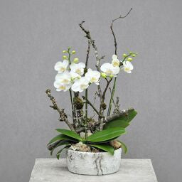Orchid Planter 12