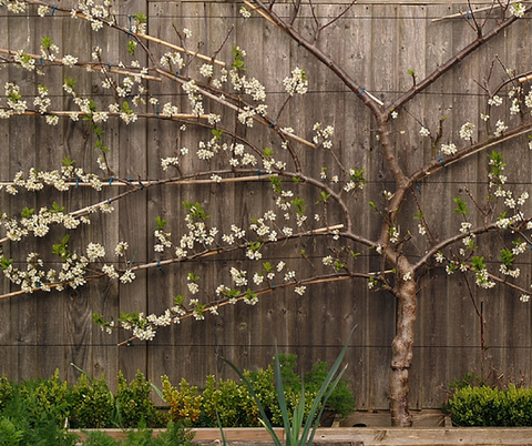 Ultramoderne ESPALIER: What does it mean? And what does it have to do with Designer MY-01