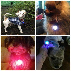 Night Safety Flash Light for Collar - Life is complete with Dogs