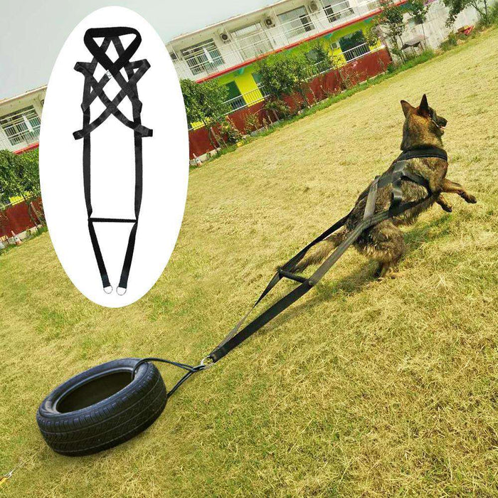 The Worlds Best Dog Pulling Sled Harness