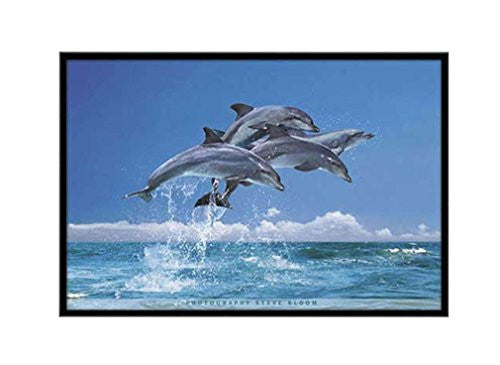 Studio B  Four Dolphins Poster