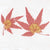 Japanese Maple Leaves(JPT-052)