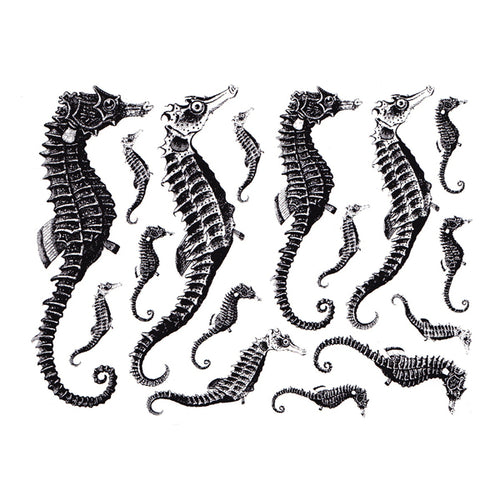 Seahorses Black (Decal-030)