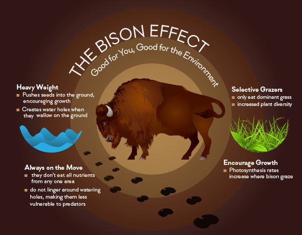 Why Choose our Bison? | Bison Farm in Maryland